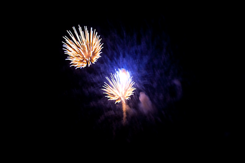Fireworks Or Sea Life? - Preview